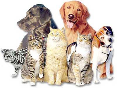Banfield Pet Insurance