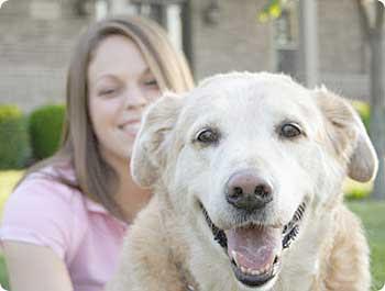 Pet Insurance in Canada