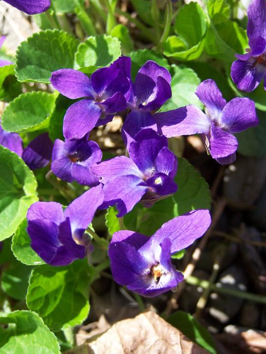 ... Color Purple Essay - The Color Purple by Alice Walker The Color Purple