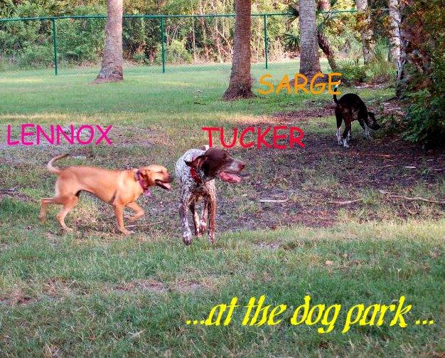 [dog+park]