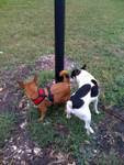 Trixie's Admirer Checks her Out by a Lamppost