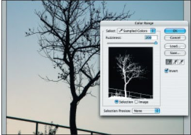селекция на дърво