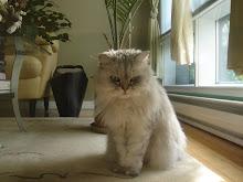 Mon p'tit bébé chat!