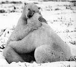 El Poder de los Abrazos