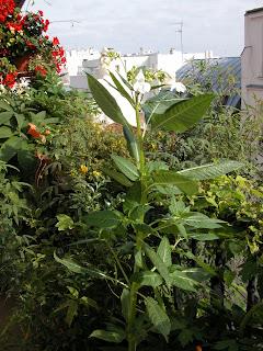 paris c t jardin qu 39 est ce qu 39 une bonne plante pour balcon r gle 1. Black Bedroom Furniture Sets. Home Design Ideas