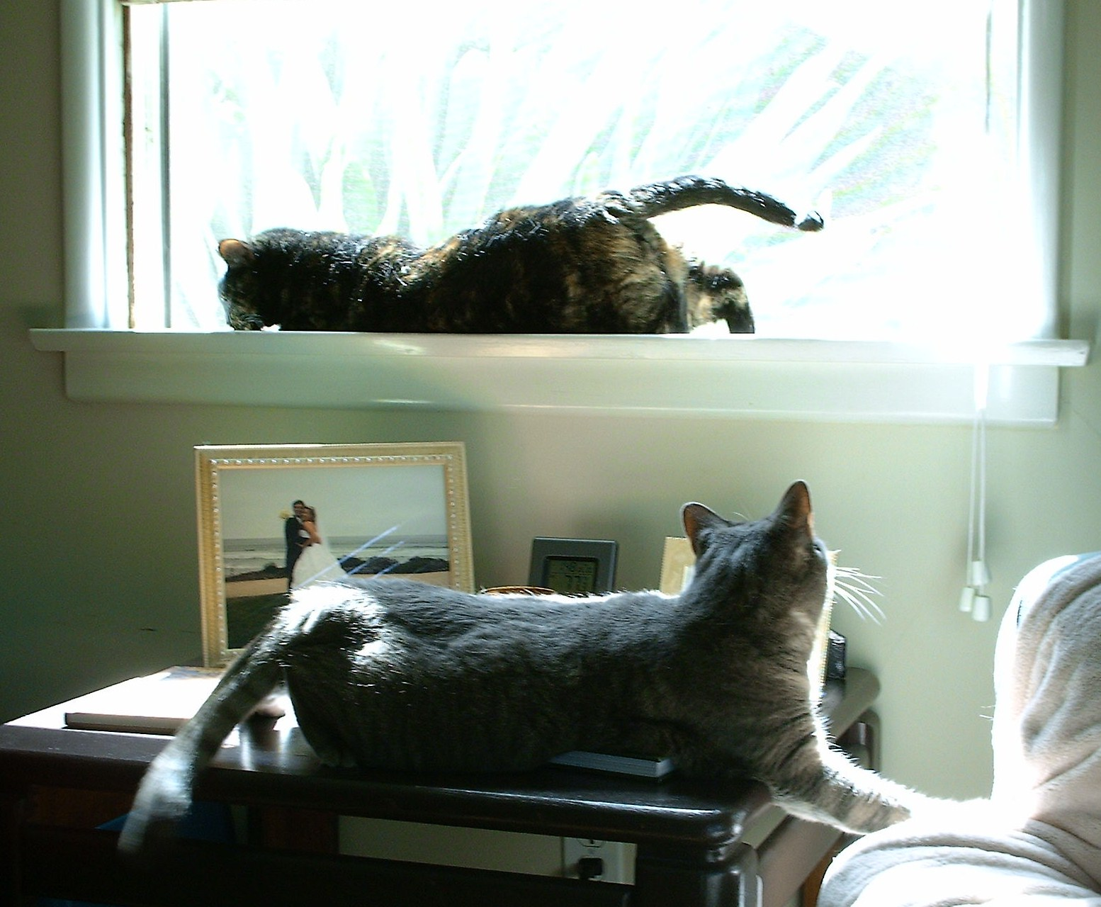 Can Cats Live Entirely Indoors