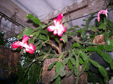 FLOR DE MAIO