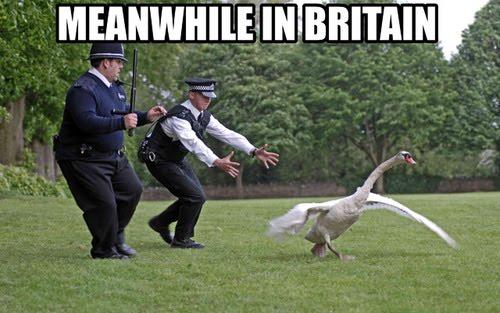 meanwhile-in-britain.jpg