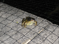 frog on side of pond