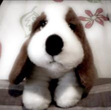 little hush puppi