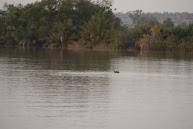 Hippo, goed zichtbaar mét verrekijker