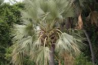 Palmboom op de rivieroever
