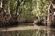 Tussen de mangrove's