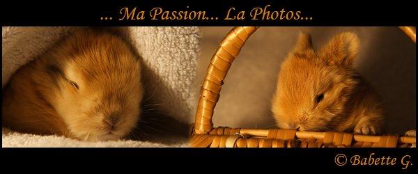 ...Ma Passion; La Photo...