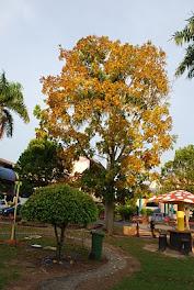 Daun Pokok