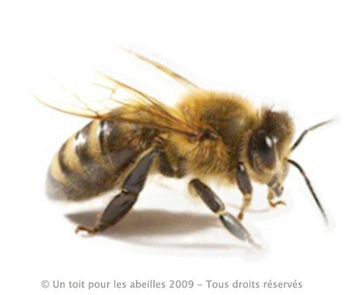 Soyez sympa, prenez les abeilles en photo !