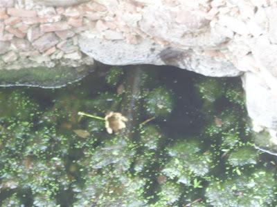 Visita al terreno de la noria con tunel y la aparición IMG_0201+%28Large%29