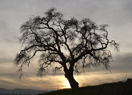 ايقنت شجرة تستبق خريفك