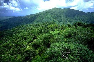 los bosques de puerto rico: