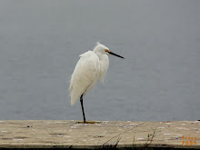 SNOWY EGRET IN THE FOG