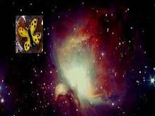 S U E Ñ O (La mariposa I parte)