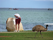 Emu on the beach