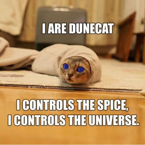 [dune-cat.jpg]