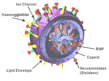 Outside Parts of a Virus