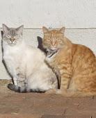 James & Misty
