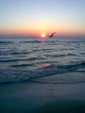 ,,Om liber, tu vei iubi intotdeauna marea!'' (Ch.Baudelaire)