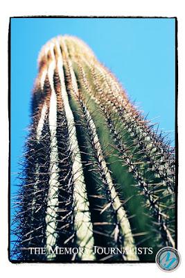 Arizona Travel Photos 5