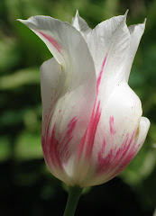 A Tulip In Recognition of Parkinson's Disease