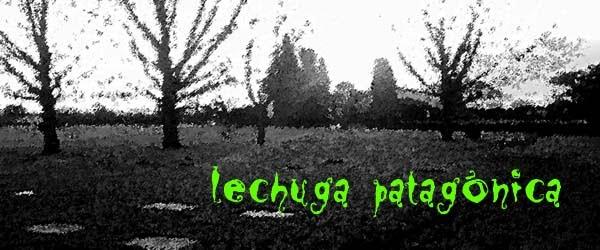Lechuga Patagónica