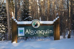 Algonquin Park Gate In Winter