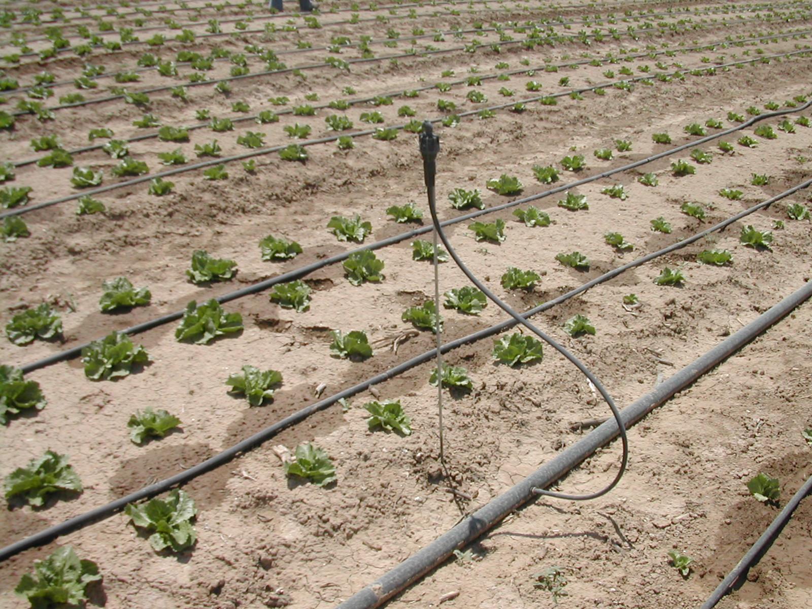 Massima efficienza irrigua la combinazione di irrigazione for Irrigazione per aspersione