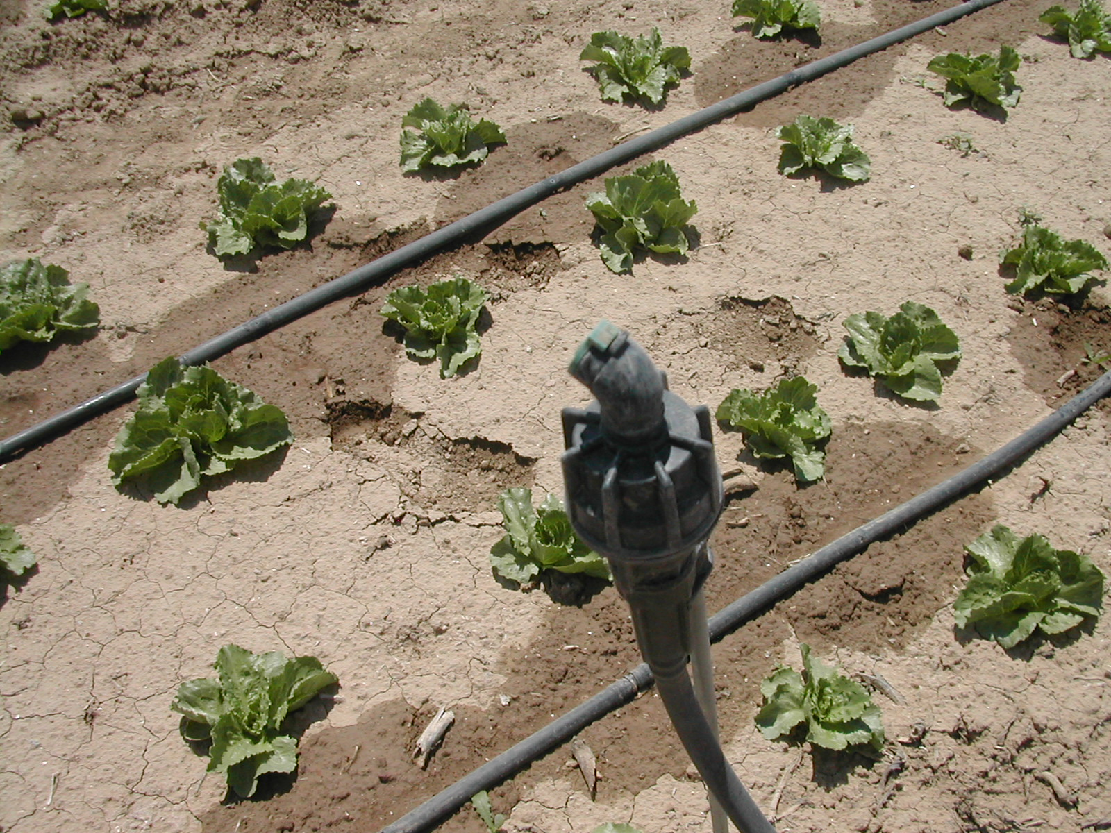 Irrigazione a goccia microirrigazione e fertirrigazione for Gocciolatori per irrigazione a goccia