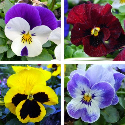 Gardening: Winter Flowers for