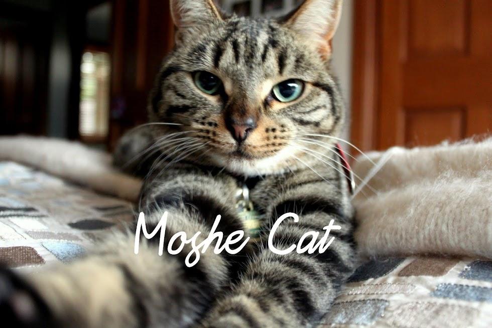 Moshe Cat