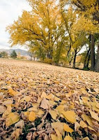 «Осень в пятнах заката песнопевца листвы...»