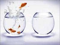 Ближайшая цель — жить в другом аквариуме