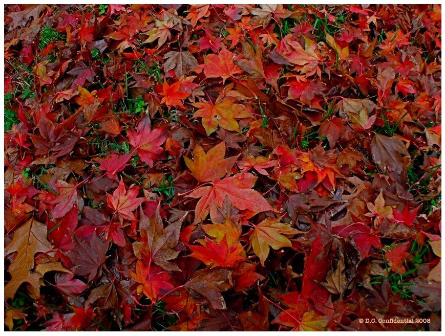 [19.4_Falling-Leaves.JPG]