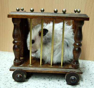 how to spot clean a hamster cage
