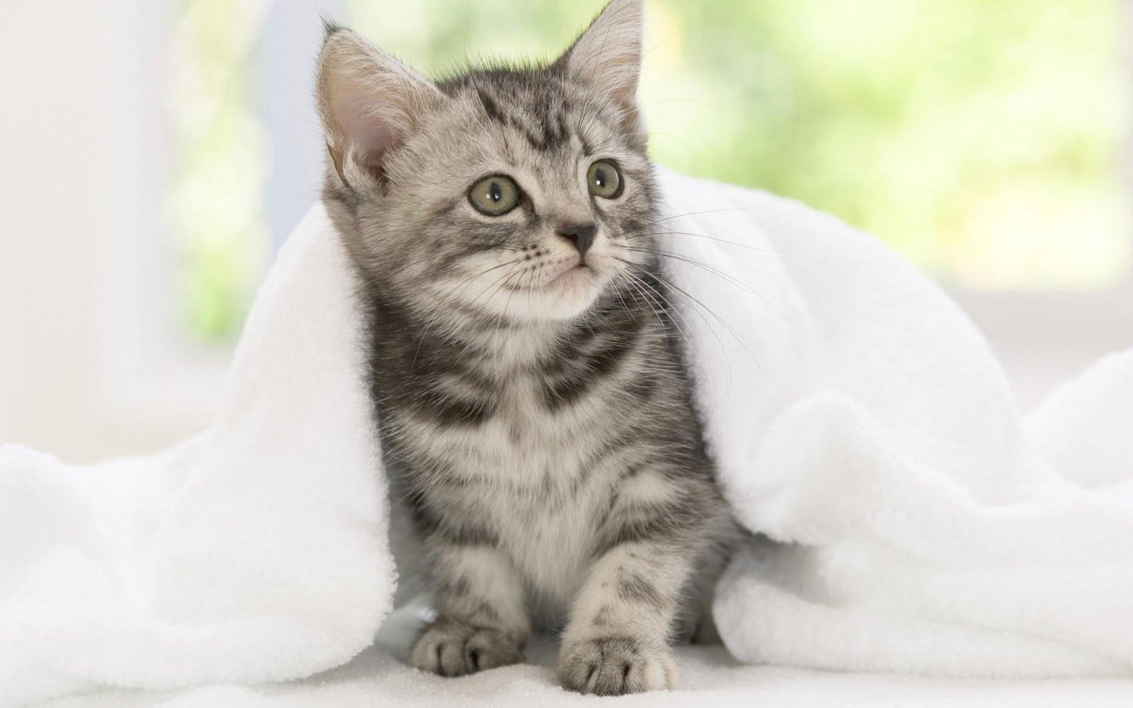 http://4.bp.blogspot.com/_KLJU3hHDGVM/S-lCtBUcy8I/AAAAAAAAB-A/OJ7s6kmV7ww/s1600/cats+%282%29.jpg