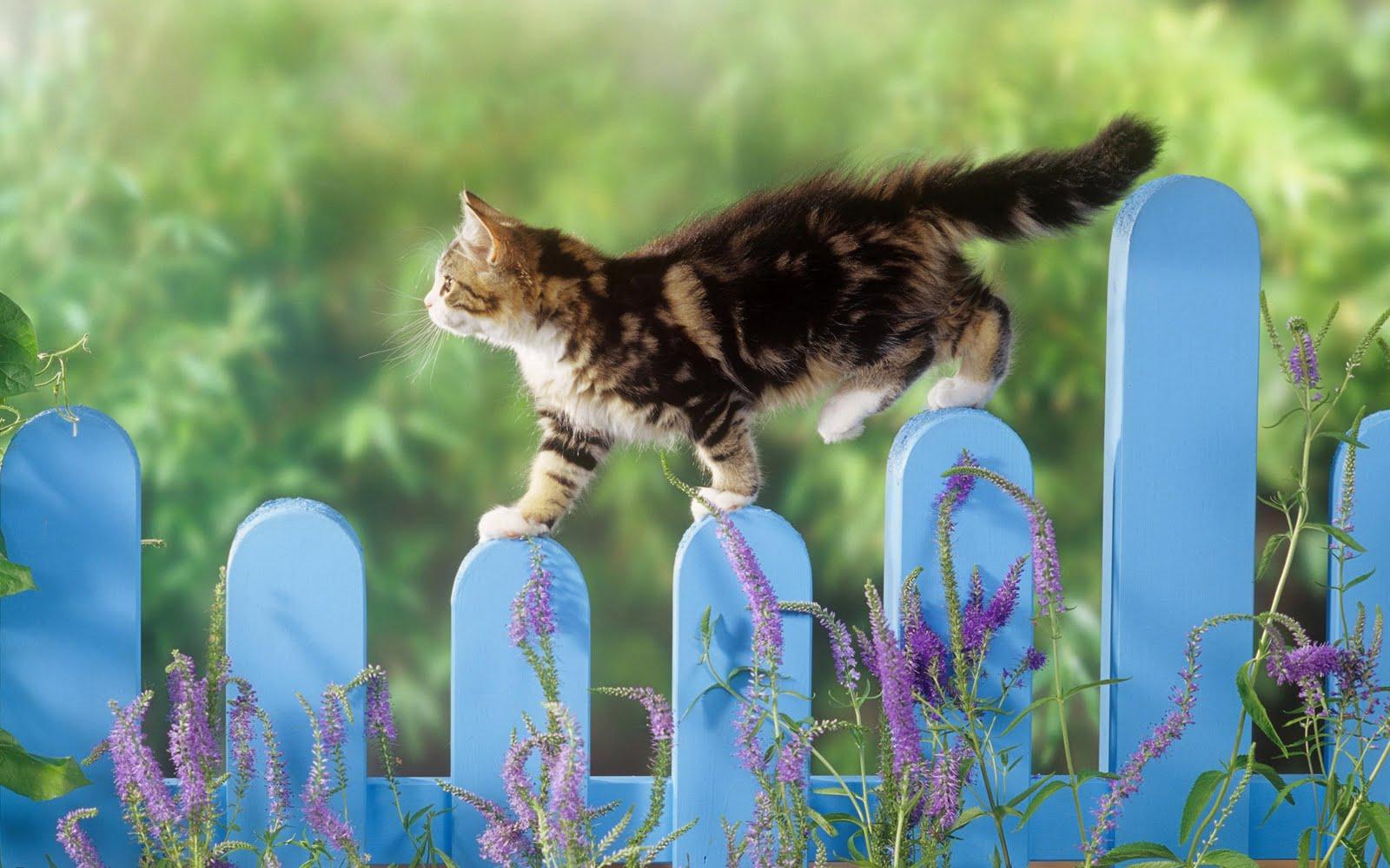 http://4.bp.blogspot.com/_KLJU3hHDGVM/S-lCtgHKsZI/AAAAAAAAB-I/TBie_lH2KeQ/s1600/cats+%283%29.jpg