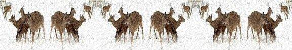 white tail deer photo banner image
