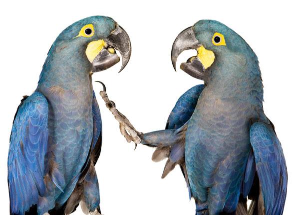 [bird3]