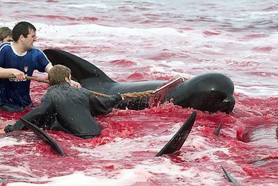 balina-resimleri