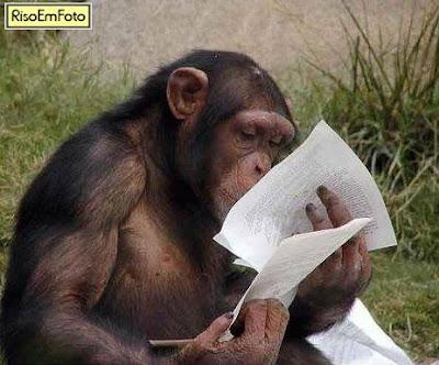 Macaco Chipanzé olhando documento impresso.