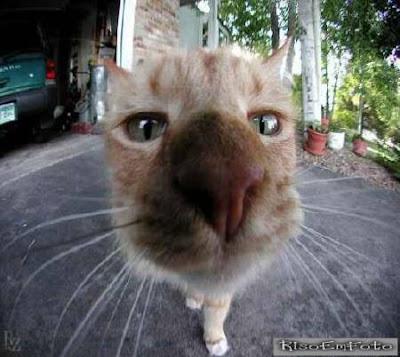 Xaninha, nome vulgar para gata, fotografada em close bem de perto.
