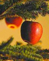 O fruto da árvore do conhecimento: saber e dor.